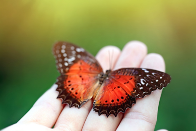 butterfly signs of hypothyroidism